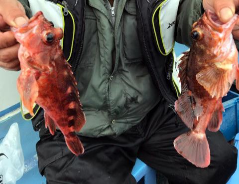 深場ガシラ釣り釣果