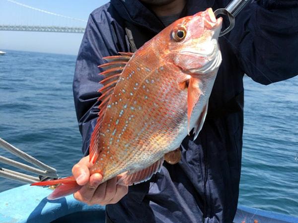 真鯛釣り釣果